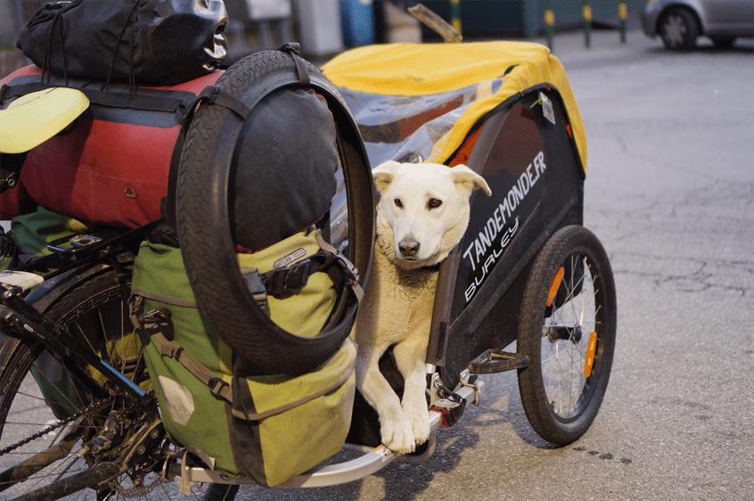 Partir en voyage à vélo avec son chien